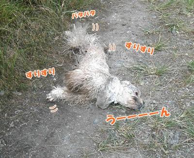 042_20110807150028.jpg