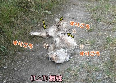 043_20110807150027.jpg