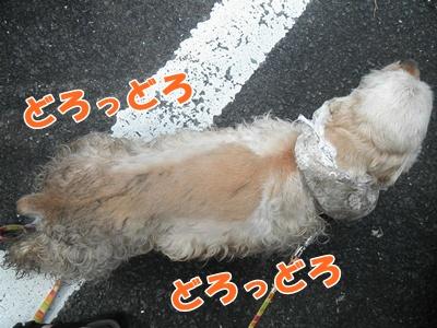 045_20110807150027.jpg