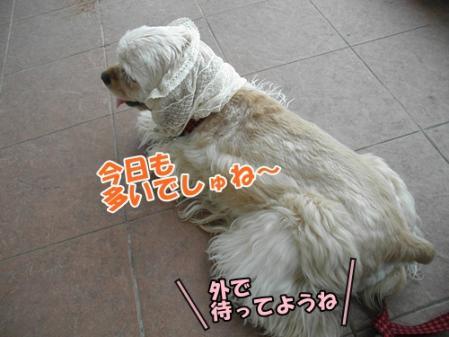 046_20110605230954.jpg