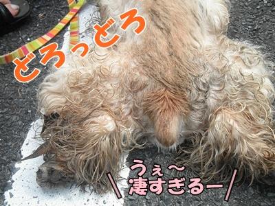 046_20110807150027.jpg