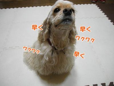 046_20110811180450.jpg