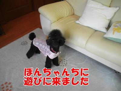 048_20110716215416.jpg