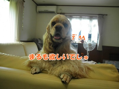 055_20110718220328.jpg