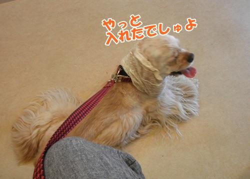 056_20110605230953.jpg
