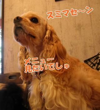 060_20110530220834.jpg