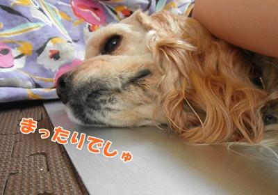 064_20110710142743.jpg