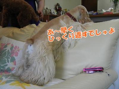 077_20110718220145.jpg