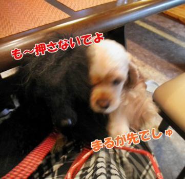 079_20110530220253.jpg