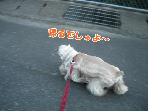 087_20110605234006.jpg