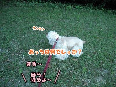097_20110605234101.jpg