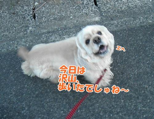 100_20110605234101.jpg