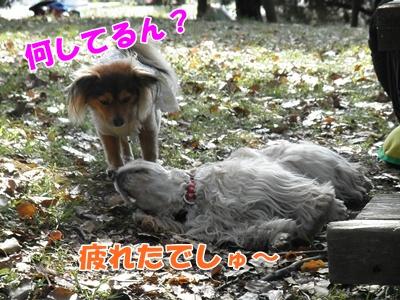 105_20110412210910.jpg