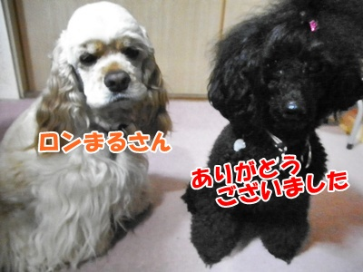 105_20110529204643.jpg