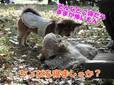 107_20110412210910.jpg
