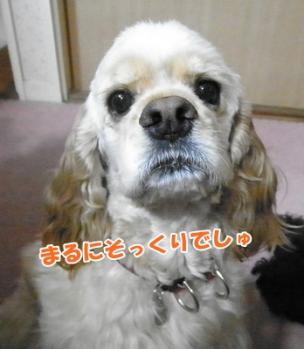 111_20110529204643.jpg