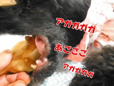 164_20110905203015.jpg