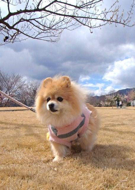 散歩道の花 088-1_edited-1