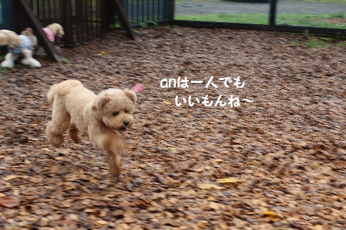 IMG_0108(1).jpg
