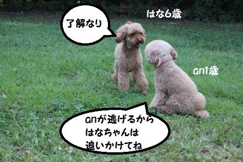 IMG_0431(1).jpg