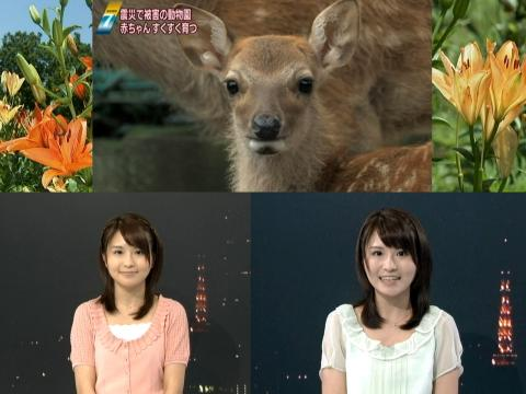 岡村真美子 被災地の動物