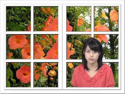 癒しの窓 8.28