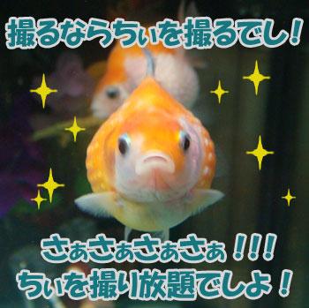 ちぃカメラ2