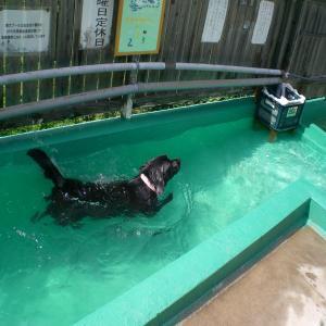 プールのアンジー2