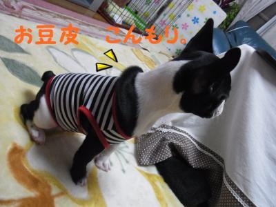 001_convert_20111215164110.jpg
