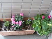 玄関前のお花