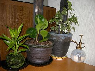 観葉植物三種