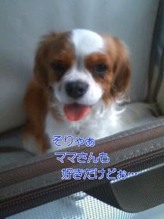 20100410173006.jpg