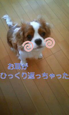 20100517123403.jpg
