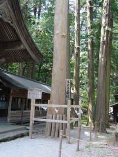 諏訪本宮 三の御柱