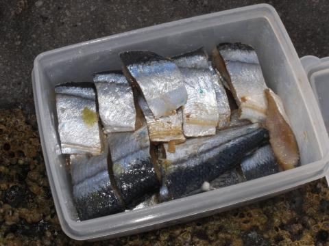 鮭釣り ウキルアーでの鮭釣り エサ