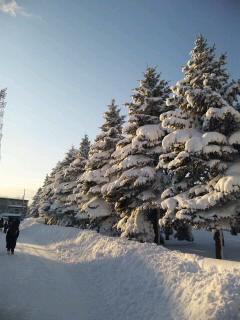 20111219雪