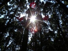 明神登山4
