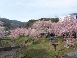 11.04.17.明神ヶ岳37