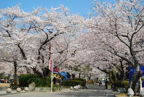 江川鴨島公園1