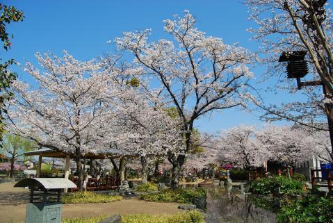 江川鴨島公園2
