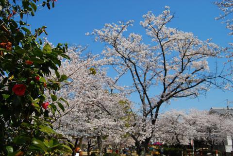 江川鴨島公園3