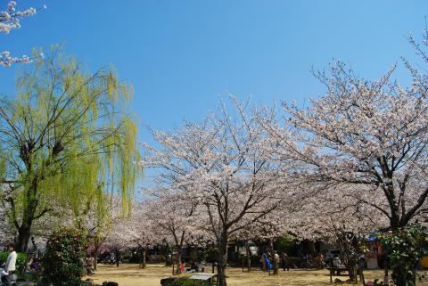 江川鴨島公園4