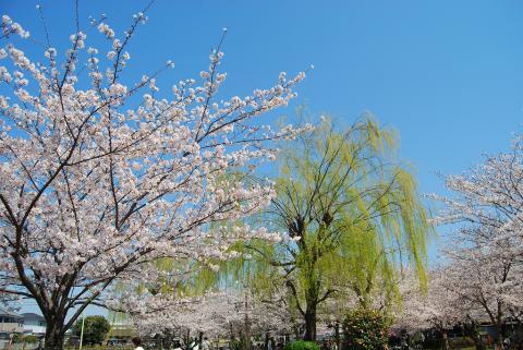 江川鴨島公園5