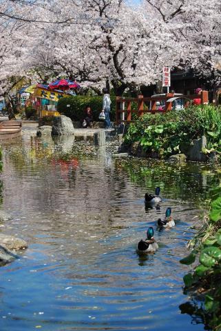 江川鴨島公園6