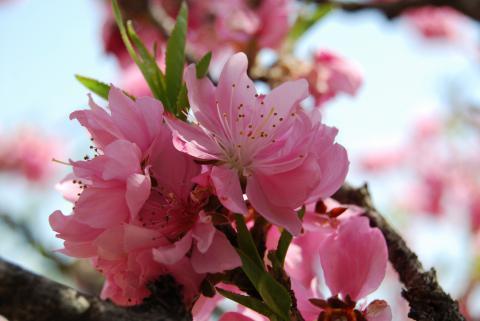 高開春の花1