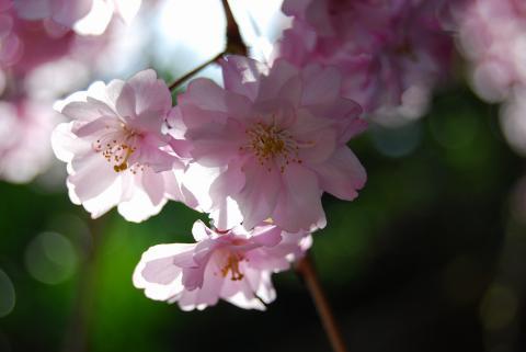 高開春の花2