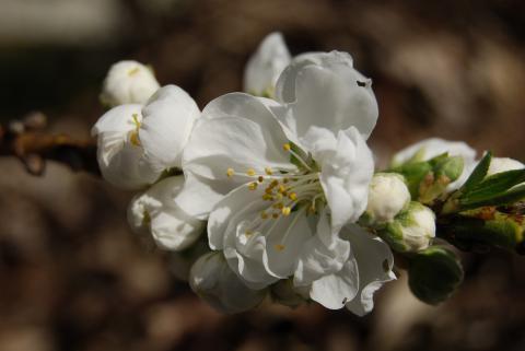 高開春の花3