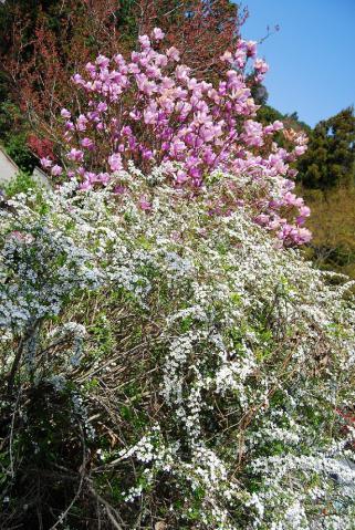 高開春の花4