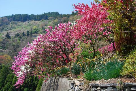 高開春の花6