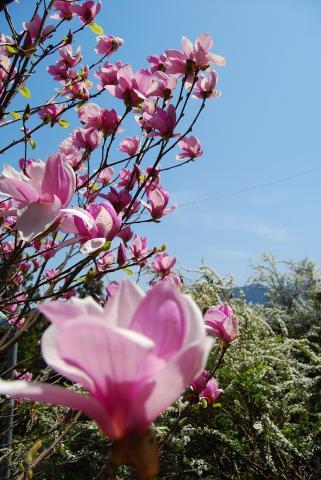 高開春の花7